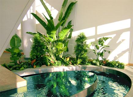 Cuidados para plantas de interior luz aire y suelo for Plantas interior sin luz