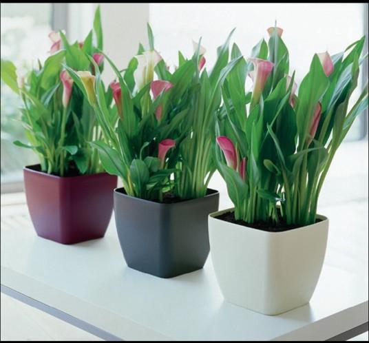 Plantas de interior o de follaje