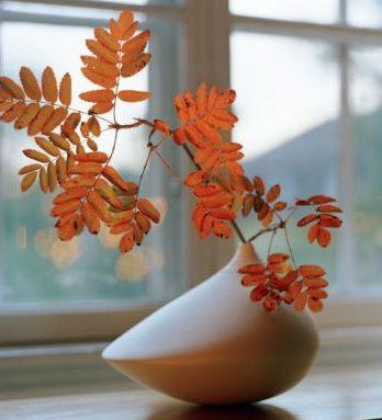 ¿Qué hacer y como cuidar las plantas en otoño?
