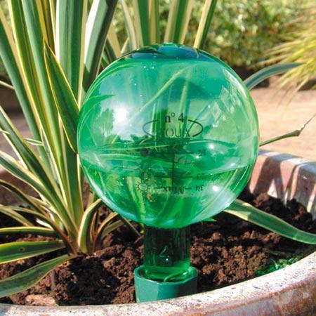 Cuidados para plantas de interior: riego y agua justa