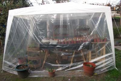 Aclimatación de las plantas de huerto bajo campanas