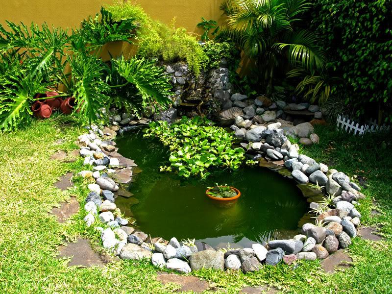 Agua verde y algas en estanques piletas y peceras Acuaticas