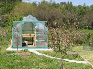 Especies tempranas para cultivar en invernadero huerta for Vivero e invernadero