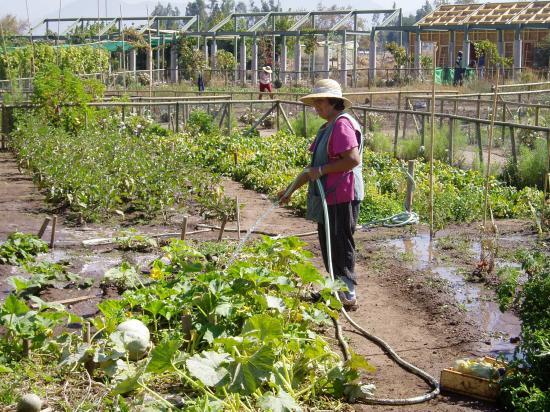 Preparación del suelo para la siembra en la huerta