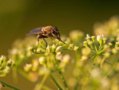 Conozca el comportamiento y ciclo vital de cada plaga para prevenirlas y combatirlas