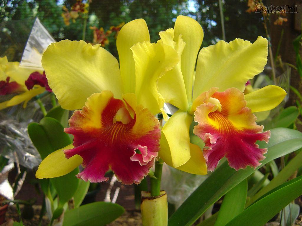 Orquídeas: cultivo, cuidados y riego