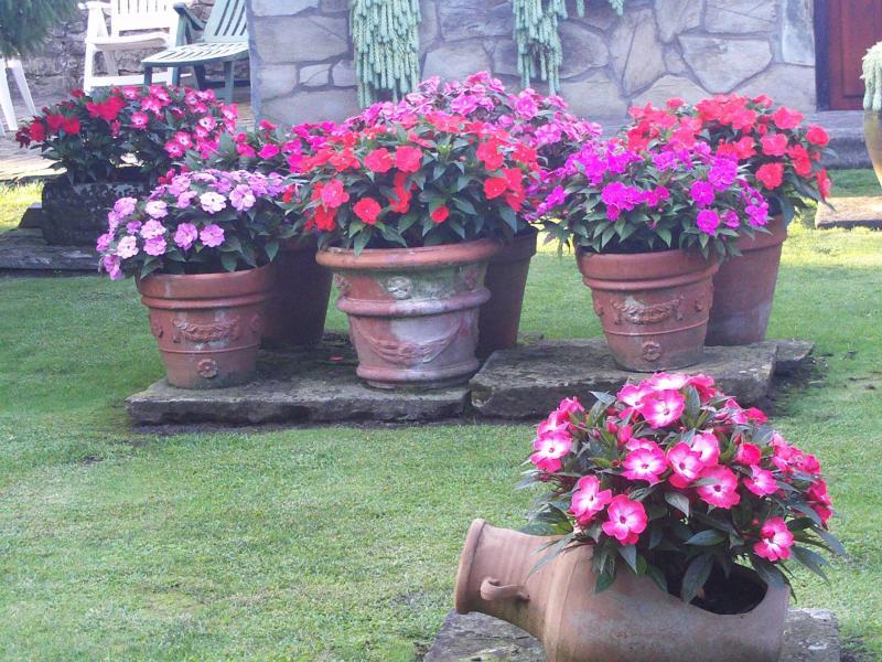 Como armar y sembrar en una maceta tierra profundidad y for Que plantas poner en una jardinera