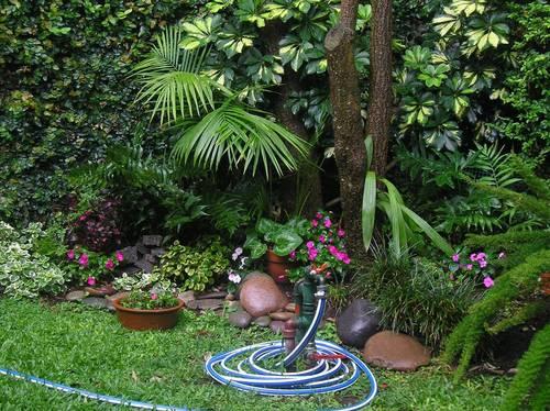 Armando tu jard n plantas para sombra flores jardin for Plantas para jardin