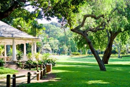 Cómo darle sombra con árboles a tu jardín
