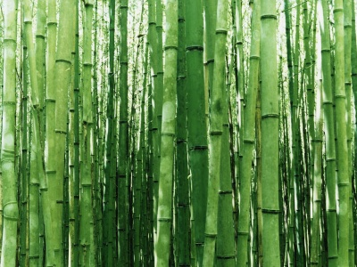 Cultivo, cuidados y mantenimiento de la caña de bambú Jardin ...