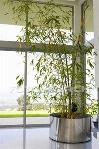 bambu maceta interior