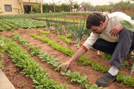 Jardinería orgánica: insecticidas caseros y orgánicos para combatir plagas sin contaminar