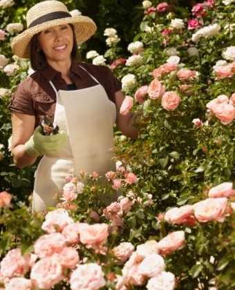 Tipos de rosas: clasificación y variedades de rosales
