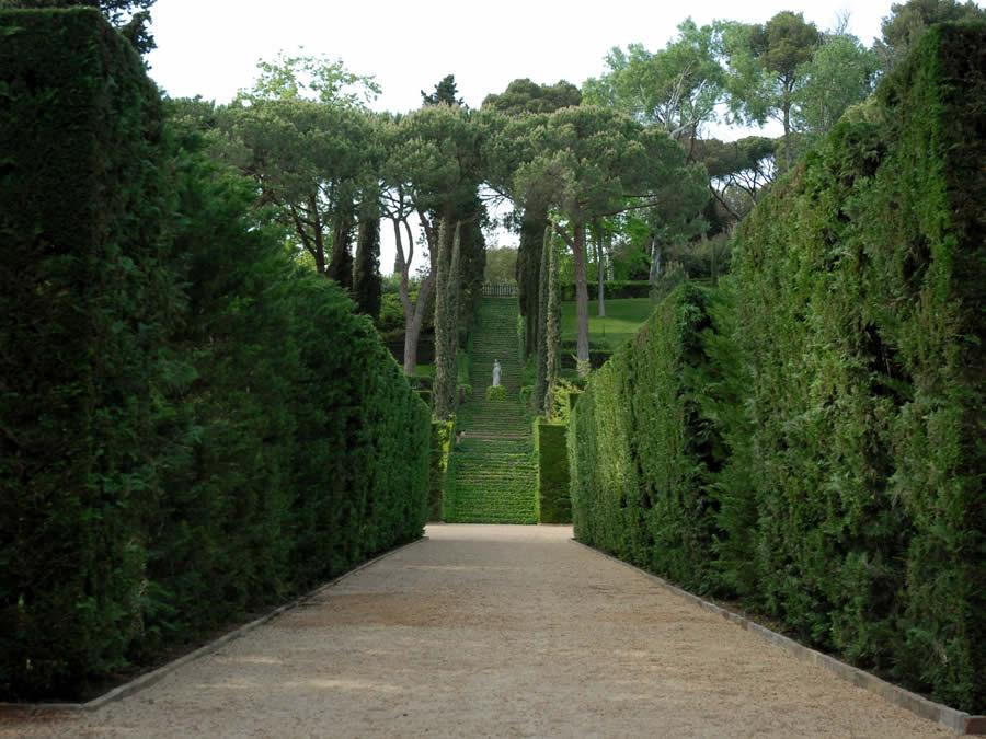 Delimita espacios y cerca tu jard n con ligustros dise o - Arbolitos para jardin ...