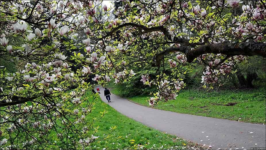 Embellecer el jard n con magnolias las diferentes - Jardin con arboles ...
