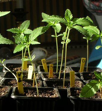Esquejes: cómo reproducir una planta por medio de gajos