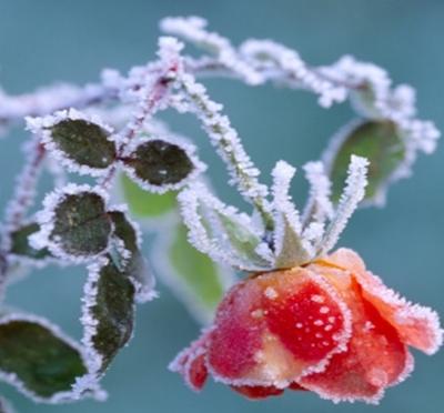 Protege tus plantas del frío: macetas y jardines pequeños