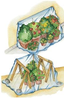 Protege tus plantas del frío: macetas y jardines pequeños Macetas, Mantemiento Jardin, Plantas - Flor de Planta