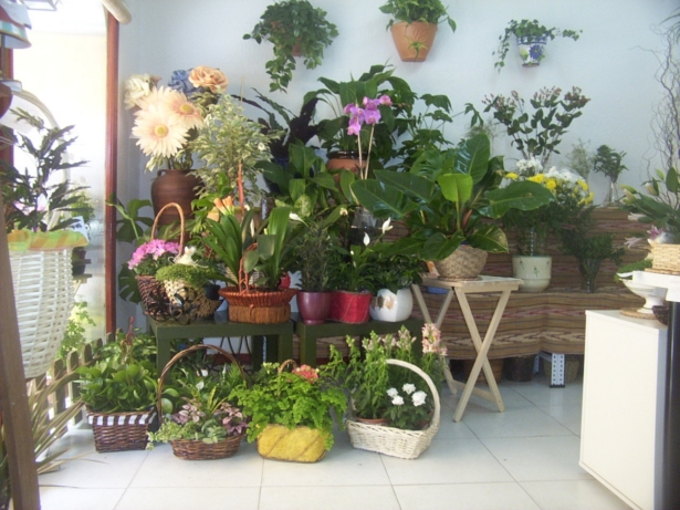 Protege tus plantas del fr o macetas y jardines peque os for Decoracion de jardines pequenos con flores