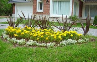 Armando tu jard n plantas de sol dise o jardin flor de - Plantas exterior mucho sol ...