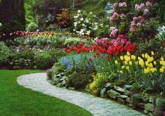 Armando tu jardín: plantas de sol