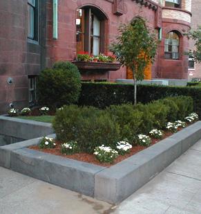 Armando tu jard n plantas de sol dise o jardin flor de - Plantas para terrazas con mucho sol ...