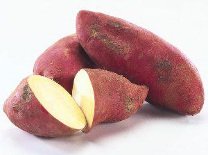 Trabajo en la huerta: cultivo de batata