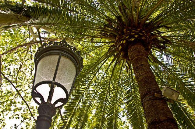 Palmeras el toque tropical para jardines parques o - Tipos de palmeras de interior ...