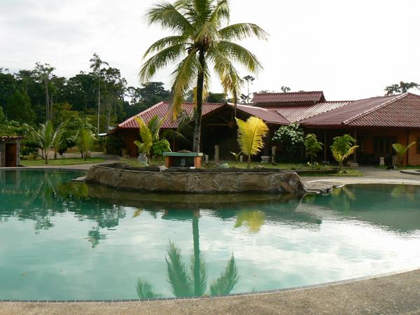 Palmeras el toque tropical para jardines parques o for Jardines con palmeras