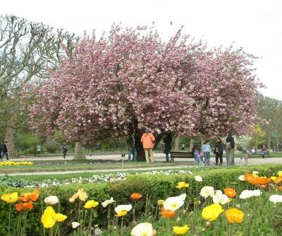 Rboles ornamentales c mo elegir los m s adecuados for Arboles ornamentales jardin