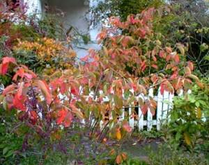 Rboles ornamentales c mo elegir los m s adecuados for Arboles ornamentales de jardin