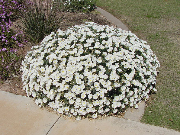 Las plantas m s resistentes al verano calor y sequ a for Arbustos de exterior resistentes