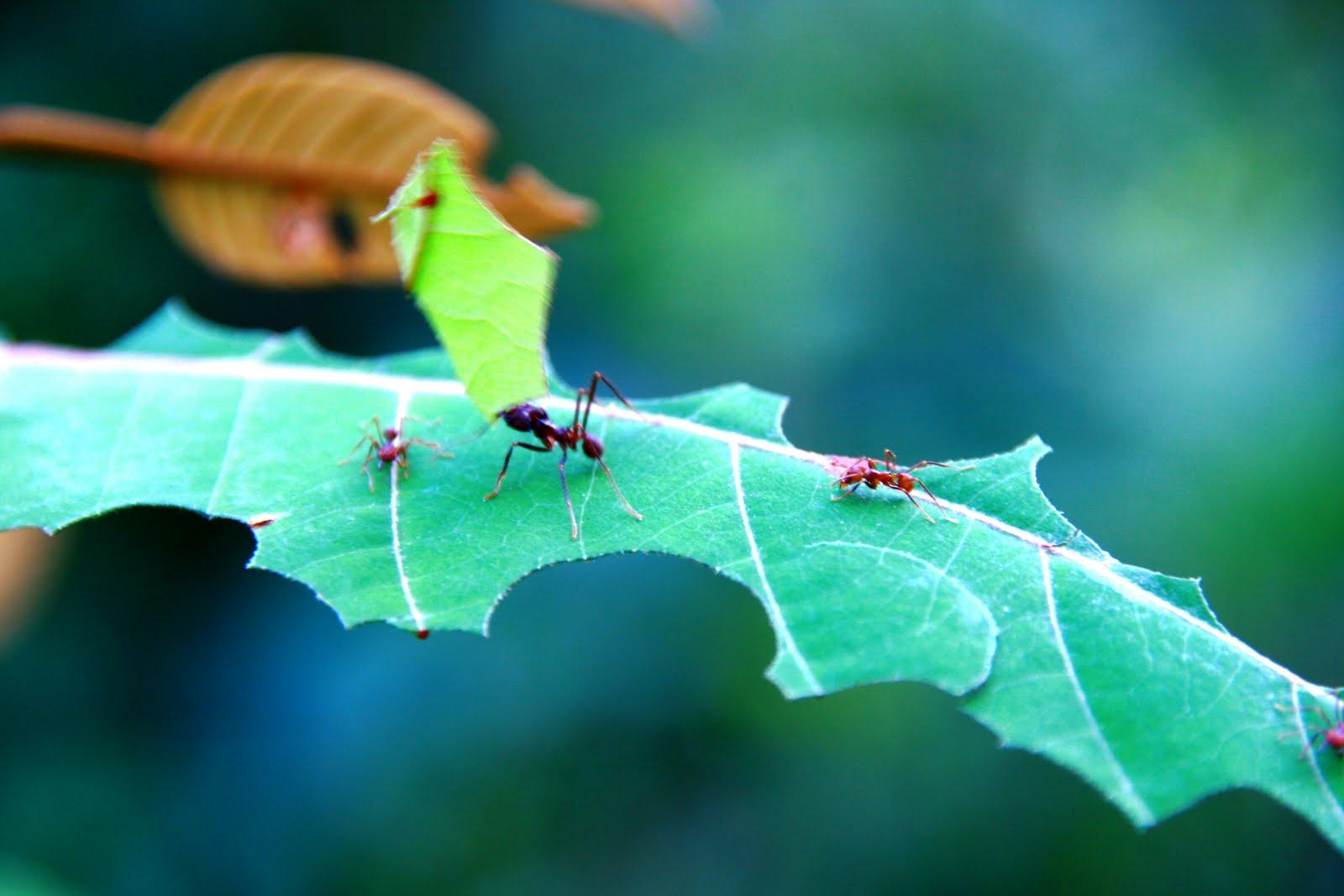 Como combatir las hormigas en el jardín