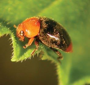 Plagas de jardín: cómo combatir los pulgones
