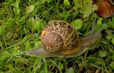 Plagas de jardín: cómo combatir babosas y caracoles