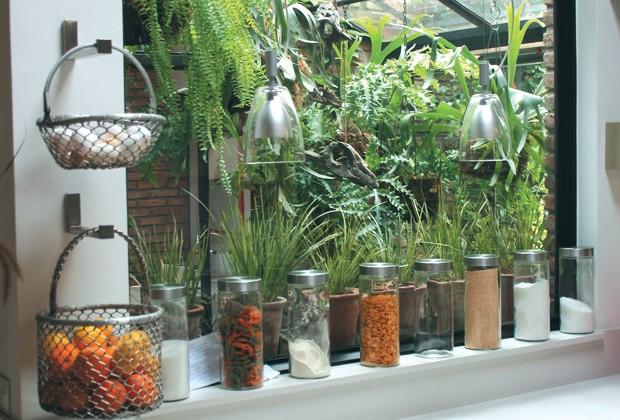 Cinco trucos para mimar tus plantas