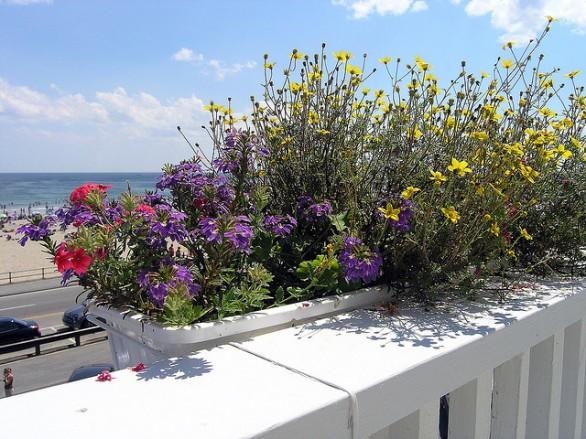 Flores para terrazas y balcones dise o jardin macetas for Plantas en balcones y terrazas