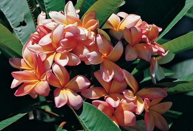 Flores Exoticas Subtropicales Para El Jardin Flores Flor De Planta