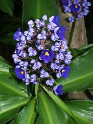 Flores exóticas subtropicales para el jardín