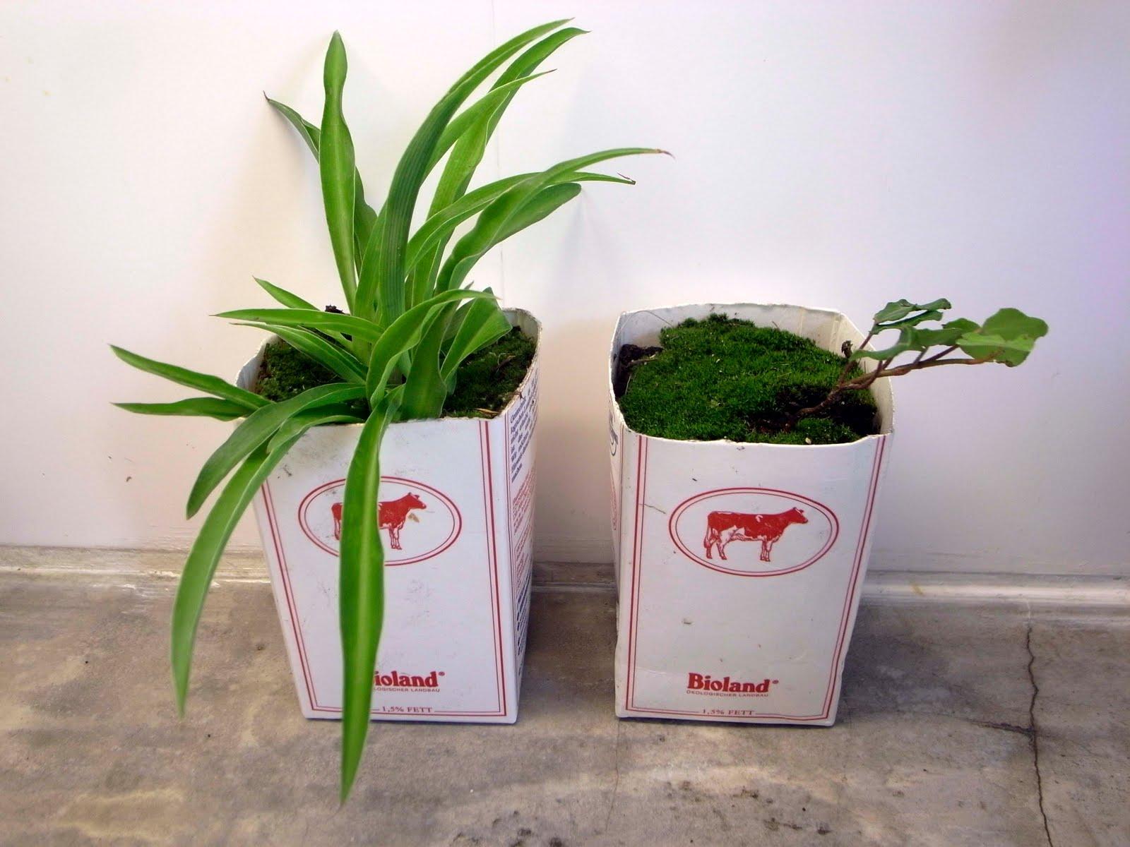 Macetas recicladas una opci n en el jard n macetas flor for Jardines en lata