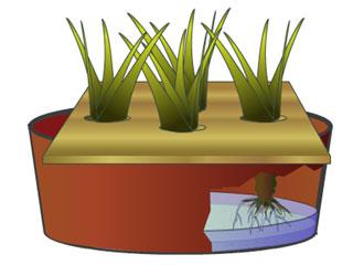 Consejos para el cultivo hidropónico