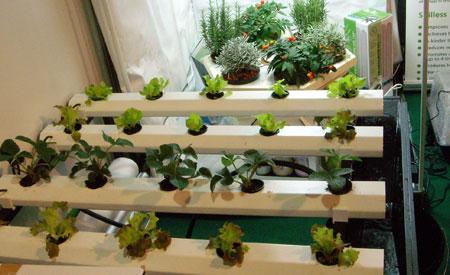 Consejos para el cultivo hidrop nico huerta plantas for Kit de cultivo de interior