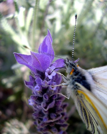 Flores que atraen mariposas al jardín