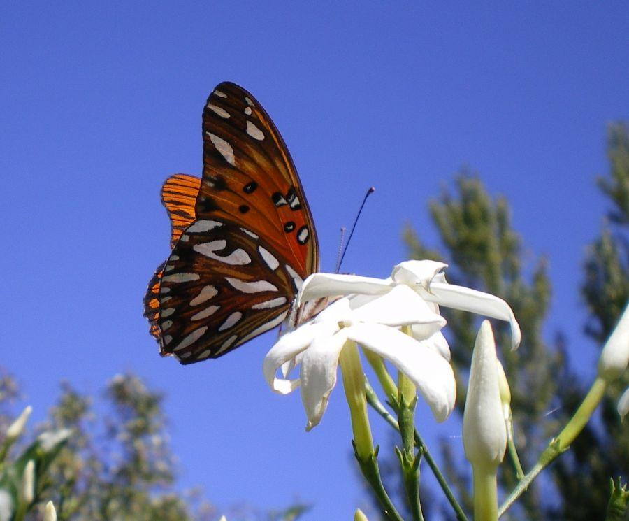 Fotografias De Mariposas Y Flores: Flores Que Atraen Mariposas Al Jardín Flores