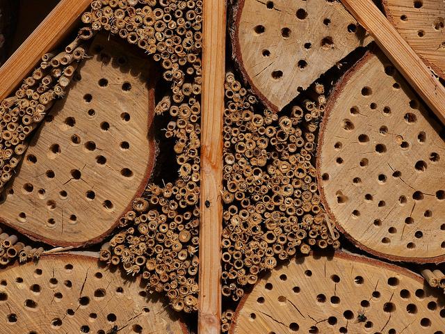 Cómo detectar, prevenir y controlar las termitas en el jardín