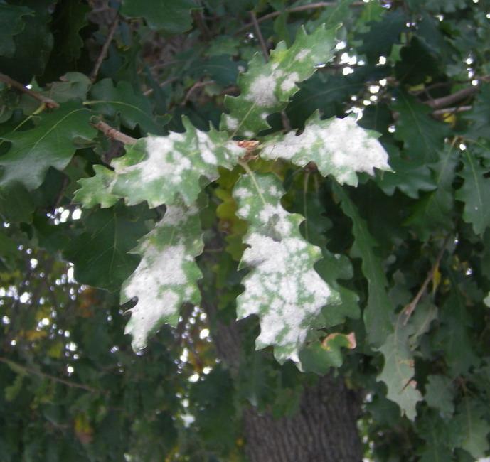 Síntomas y detección de plagas de jardín en tus plantas
