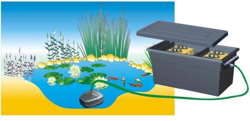 C mo armar un estanque acuaticas flor de planta flor for Como oxigenar el agua de un estanque para peces