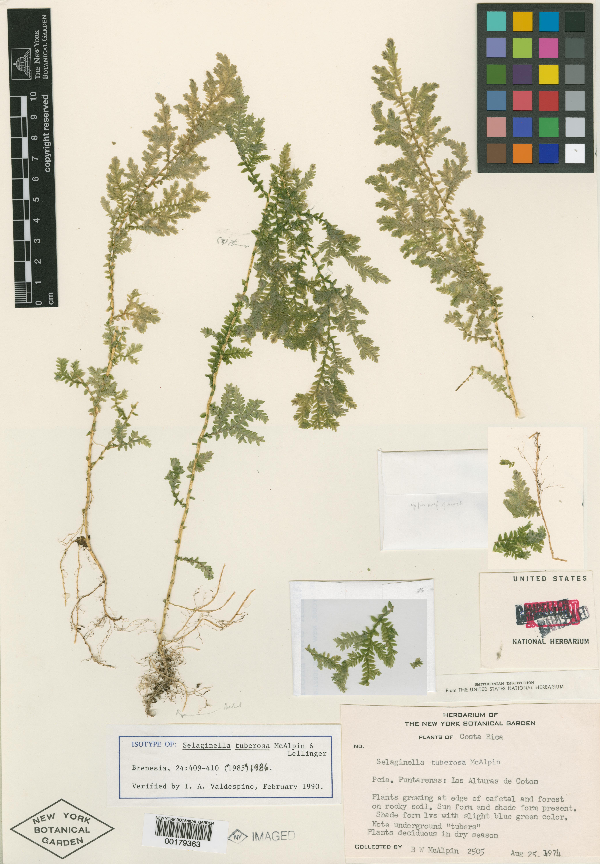 Cómo hacer un herbario