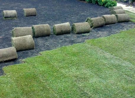 Tepe de césped natural: Cómo plantarlo