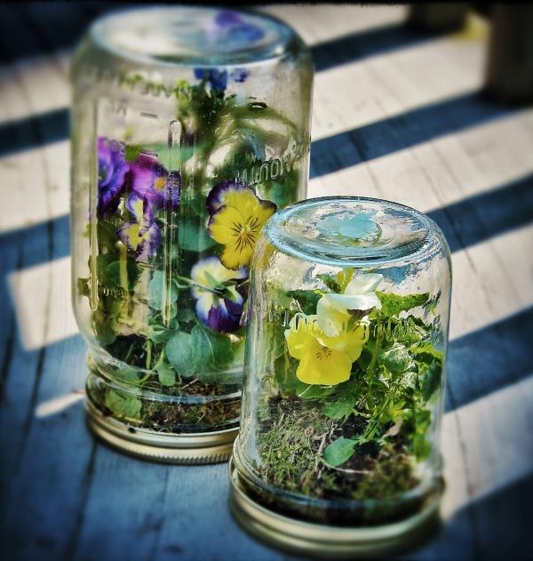 Terrarios para plantas c mo armar un jard n miniatura en for Bordillos de plastico para jardin